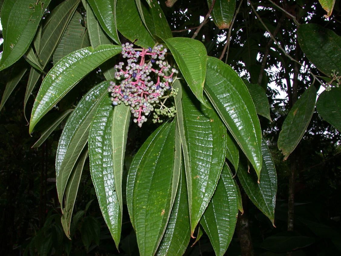 Florula Digital - Páginas de Especies